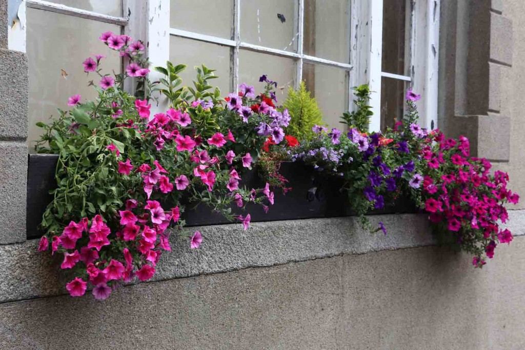 2014_windowbox_bullring